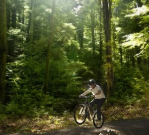 mountain biker in forest ©dreamstime.com