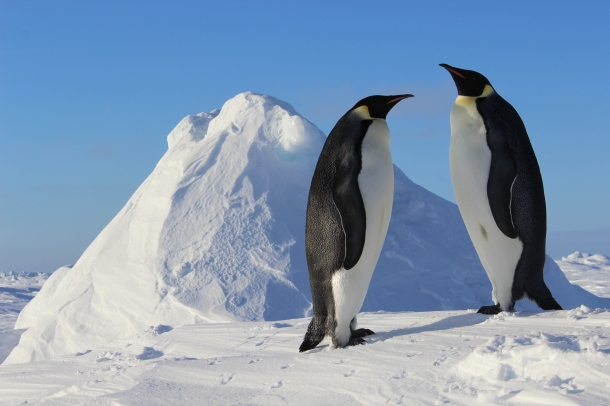 Emperor penguins spotted during Lemke's 2013 Antarctic expedition. Photo courtesy Peter Lemke.